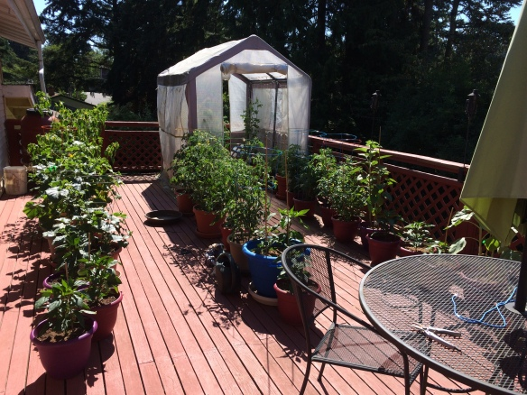 Garden Deck Expanded